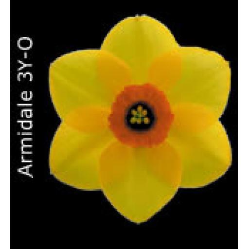 Div 3 - Small Cupped Daffodils Y-O/R