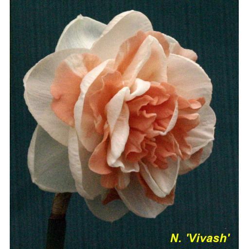 Vivash - angled view.jpg